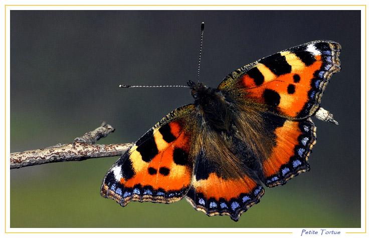 Document sans titre - Images de papillon ...